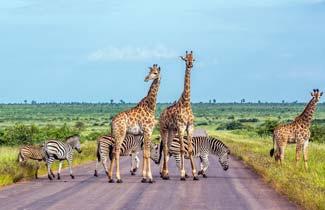 אמא, אבא, זברה: טיול בטבע הפראי של דרום אפריקה