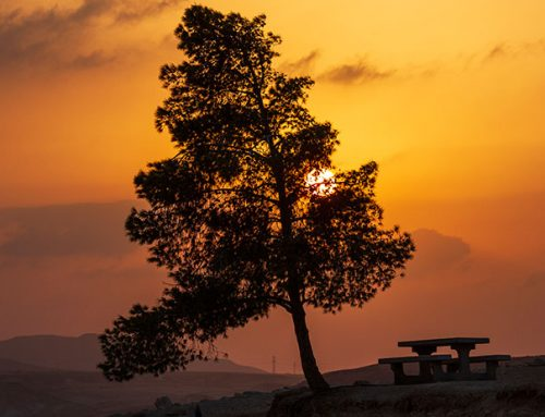 50 shades of yellow: Israel's magical desert
