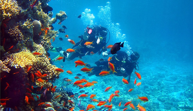 The coral reef in Eilat